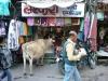 Bustling Jaipur