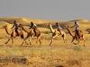 Camel Festival of Rajasthan